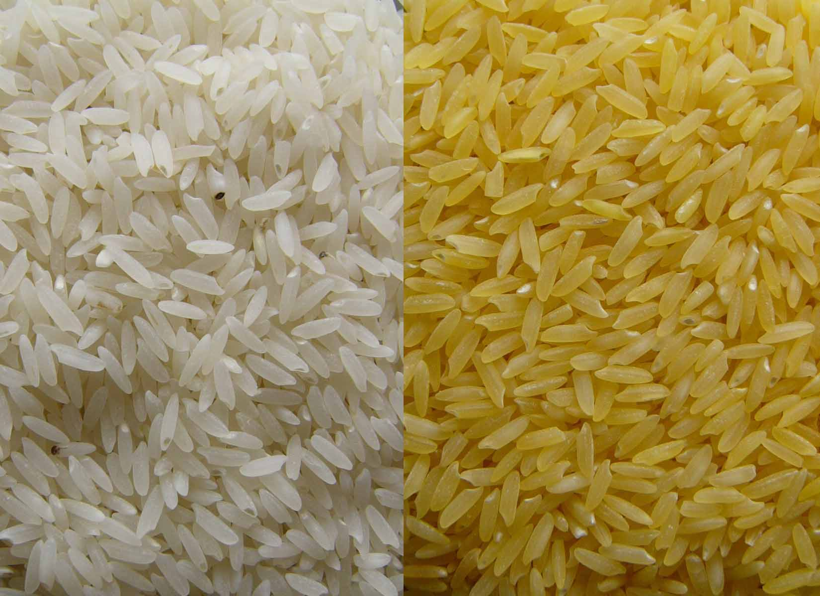 Golden Rice