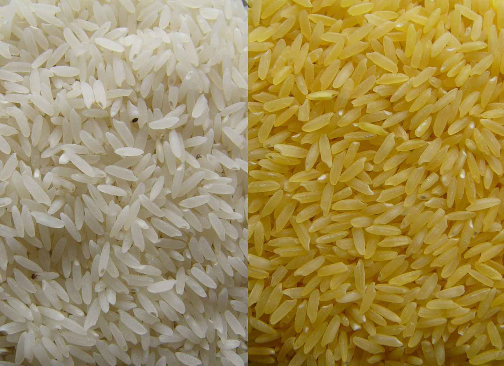 Biofortified Golden Rice
